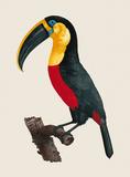 Le Grand Toucan