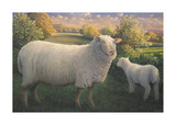 Ewe And Lamb