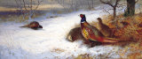 Pheasants and Hens in Snow