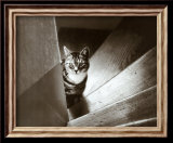 Cat in the Stairs