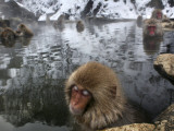 Japanese Macaques Soak in a Hot Spring Pool at Jigokudani Monkey Park in the Mountains