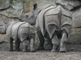 Rhinoceros and Her Youngster Hang Out in their Outdoor Enclosure at the Tierpark in Berlin