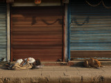 Laborer and a Stray Dog Sleep on a Pavement Early Morning in the Old Part of New Delhi  India