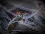 Displaced Boy Sleeps under a Mosquito Net at the Jalozai Refugee Camp Near Peshawar  Pakistan