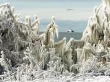 US Coast Guard Icebreaker Along the Shore of Lake Erie as Ducks Fly Overhead