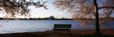 Park Bench with Jefferson Memoria in Background  Tidal Basin  Potomac River  Washington DC