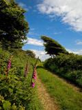 Boreen Near Ballyvooney  Copper Coast   County Waterford  Ireland