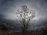 Tree Rises Above the Noravank Canyon in Southern Armenia