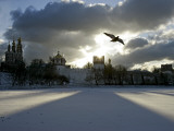 Pigeon Flies over a Frozen Pond Outside Novodevichi in Moscow