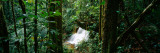 View of Waterfall in a Forest  President Figueiredo Rain Forest  Amazon  Brazil