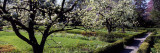 Blossom Trees in a Garden  Ellwanger Garden  Rochester  New York State  USA