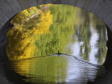 Duck Passes under a Bridge in Lazienki Park in Warsaw  Poland