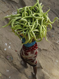 Indian Farmer Carries Cucumbers to Sell in the Market on the Outskirts of Allahabad  India