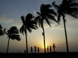 Village Boy Climbs a Coconut Tree as Others Wait Below on the Outskirts of Bhubaneshwar  India