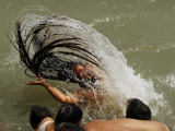 Naked Hindu Holy Man Takes a Dip in the River Ganges During the Kumbh Mela Festival in India