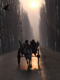 Horse Drawn Cart Makes its Way Toward the Center of the City on a Cold Morning in Srinagar  India