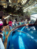 Tourists Watching Beluga Whales in an Aquarium  Shedd Aquarium  Chicago  Cook County  Illinois  USA