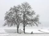 Cyclist Passes a Tree Covered with Snow  Southern Germany
