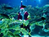 Diver Dressed as Santa Claus Feeds Fish as Part of Christmas Celebrations  Aquarium in Kuala Lumpur
