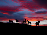 Silhouette of Horses at Night  Iceland