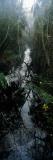 Stream Passing Through a Forest  Oscar Scherer State Park  Osprey  Sarasota County  Florida  USA