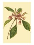 Tropical Ambrosia III