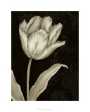 Classical Tulip I