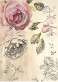Ethereal Roses II