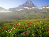 Indian Paintbrush in the Fog at Logan Pass in Glacier National Park  Montana  USA