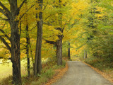 Country Road Passing by Autumn Trees  New England  USA