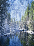 Snow Covered Trees Along Merced River  Yosemite Valley  Yosemite National Park  California  USA