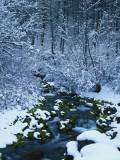 Spring-Fed Creek in Winter  Wasatch-Catch National Forest  Utah  USA