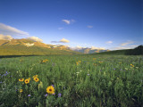 Wildflowers Along Rocky Mountain Front Near Browning  Montana  USA