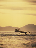 View of Humpback Whale Tail and Fishing Boat  Inside Passage  Alaska  USA