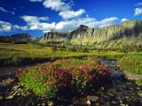 Monkeyflowers at Logan Pass in Glacier National Park  Montana  USA