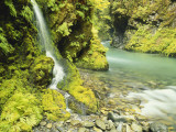 Waterfall Near Graves Creek  Olympic National Park  Washington  USA