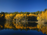 Autumn Trees Reflecting in Lake  Flatiron Lake  Dixie National Forest  Utah  USA