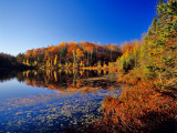 Pond in the Chaquamegon National Forest  Cable  Wisconsin  USA