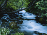 Spring-Fed Stream in Spring Hollow  Wasatch-Cache National Forest  Utah  USA