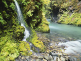 Seasonal Waterfall Near Graves Creek  Olympic National Park  Washington  USA