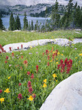 Boulders Amid Wildflowers  Ryder Lake  High Uintas Wilderness  Wasatch National Forest  Utah  USA