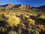 Rabbitbrush  Capitol Reef National Park  Colorado Plateau  Utah  USA