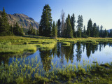 Trees and Grass Reflecting in Pond  High Uintas Wilderness  Wasatch National Forest  Utah  USA
