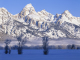 Snowcapped Mountains and Bare Tree  Grand Teton National Park  Wyoming  USA