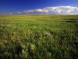 Open Short Grass Prairie North of Malta  Montana  USA