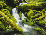 Waterfall over Moss Covered Rock  Olympic National Park  Washington  USA