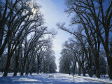 Tree Lined Promenade in Winter  Liberty Park  Salt Lake City  Utah  USA