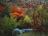 Maples and Willows in Autumn  Blacksmith Fork Canyon  Bear River Range  National Forest  Utah