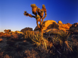Jumbo Rocks at Joshua Tree National Park in California  USA