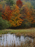 Forest and Pond in Autumn  North Landgrove  Vermont  USA